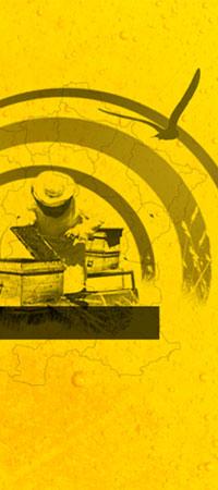 Web Design et développement du site miel-de-rucher.fr
